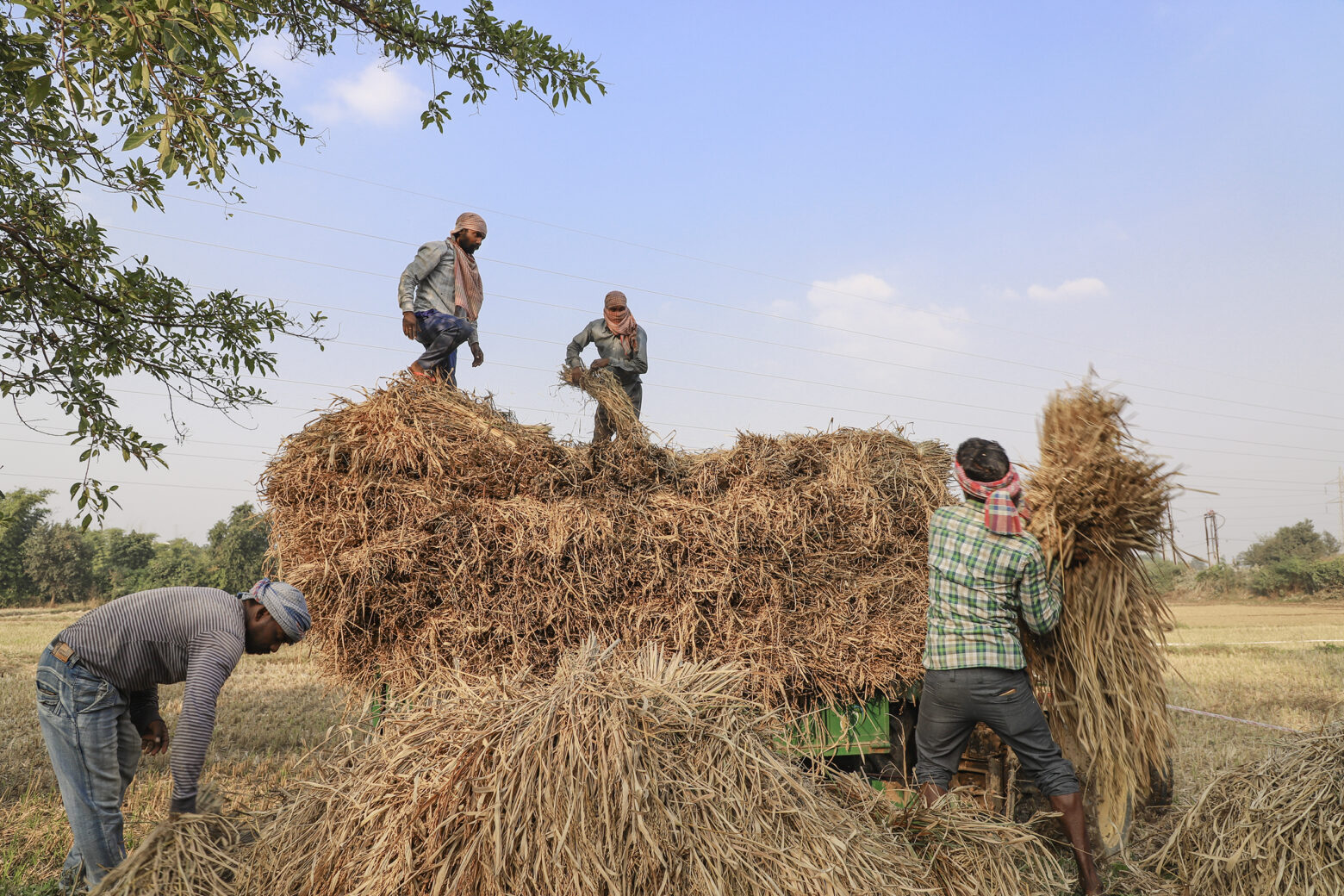 Labour working for agriculture